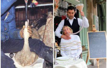 Foie gras en kinderen Jehova Getuigen